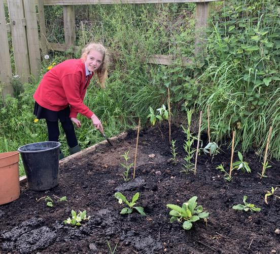 Adding plants to the butterfly border
