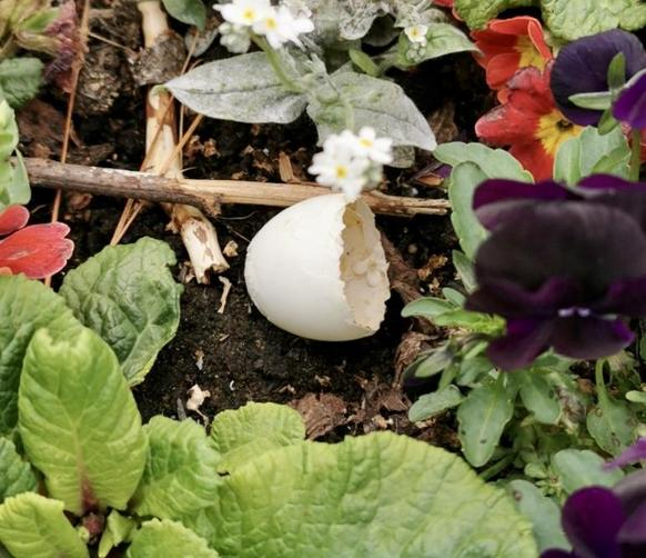 Wood Pigeon egg found by Harry