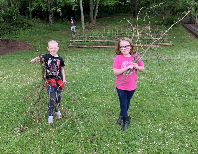 Cutting pea sticks to use in the garden