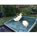16th April - splashing around in the garden