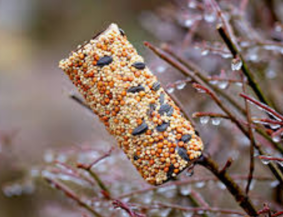 Toiet roll wrapped in bird seed and lard.