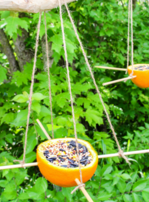 Bird seed in a hollowed out orange, with stick perches.