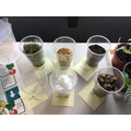 Can seeds grow anywhere?