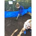 Raking the mud pit