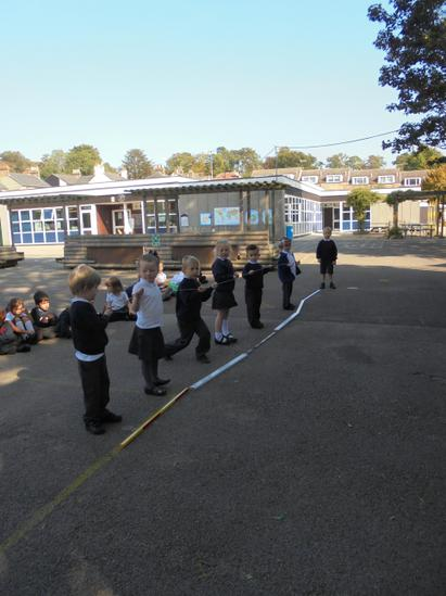 We measured the length of Stegasaurs.