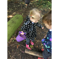 Hunting for different coloured leaves.