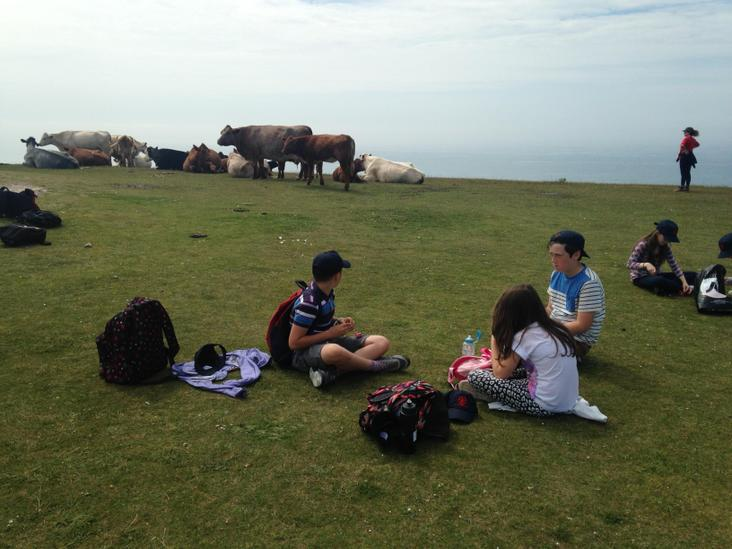 Chilling with the cattle on Tennyson Down