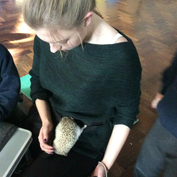 The hedgehog climbed onto Miss Booth!