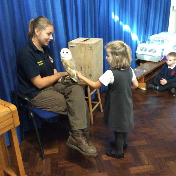 We each got to stroke the barn owl. He was so soft