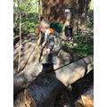 Climbing and balancing across the logs.