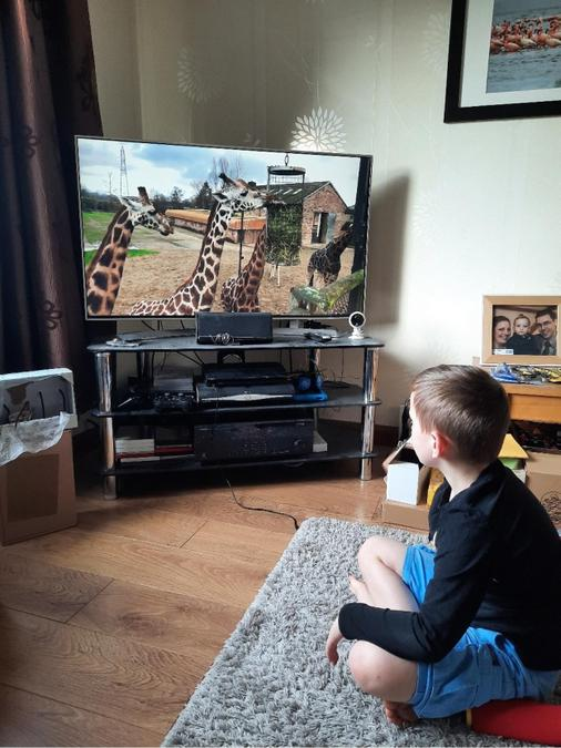 Science - Virtual trip to Chester Zoo.