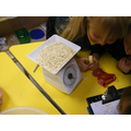 Weighing the porridge to fill different bowls