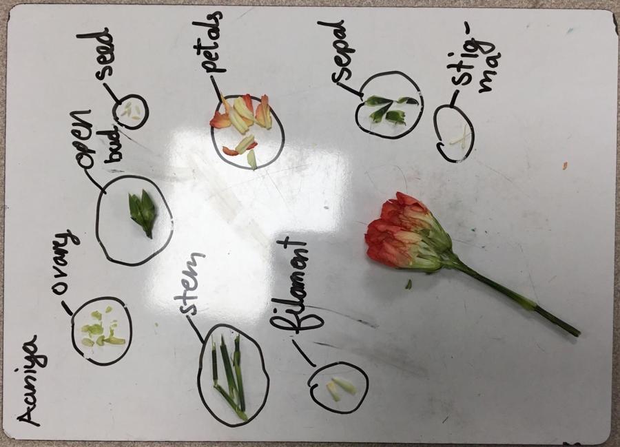 Y5 - Plants