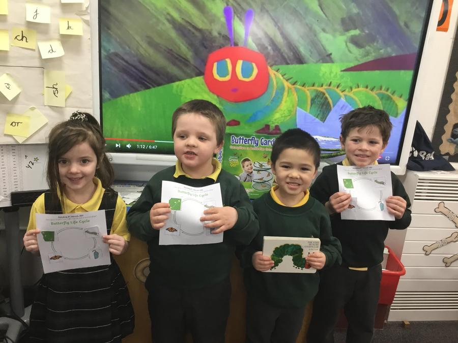 The Very Hungry Caterpillar lifecycle