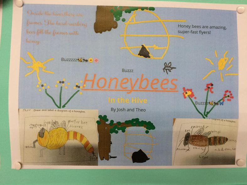 iPad publishing, Bee facts with Book Creator App.