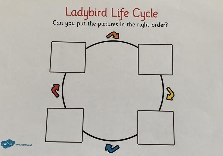 Lifecycle of a Ladybird Without Labels