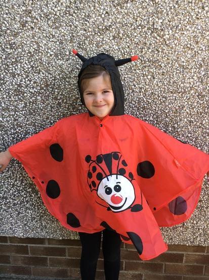 Amy the ladybird.