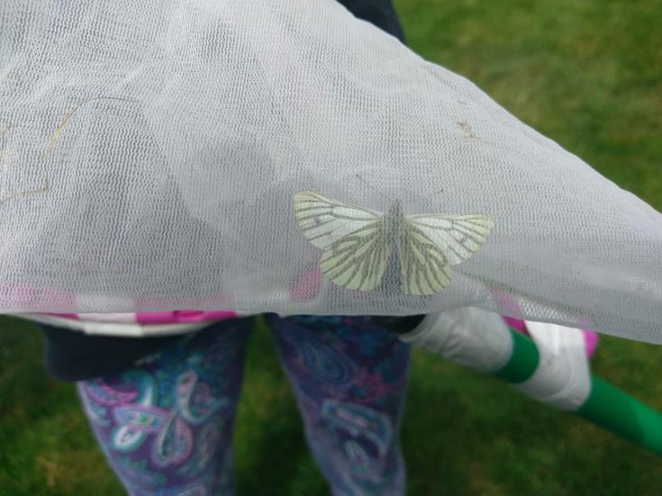 Mia's butterfly catcher.