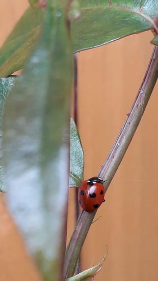 Zara found a ladybird.