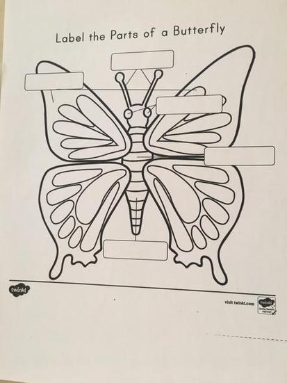 Label Butterfly Body Parts