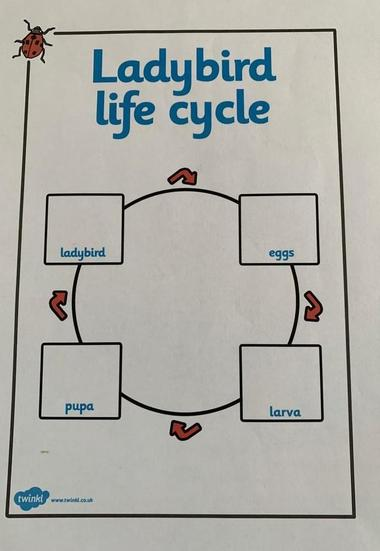 Lifecycle of a Ladybird With Labels