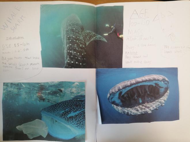 Whale sharks.