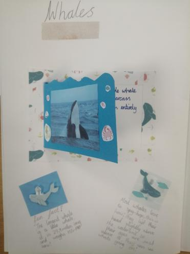 Wonderful whales.