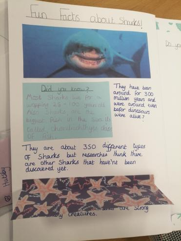 Amazing facts about sharks!