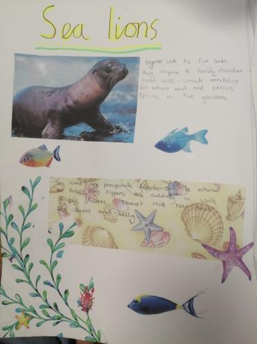 Sealions and fish.