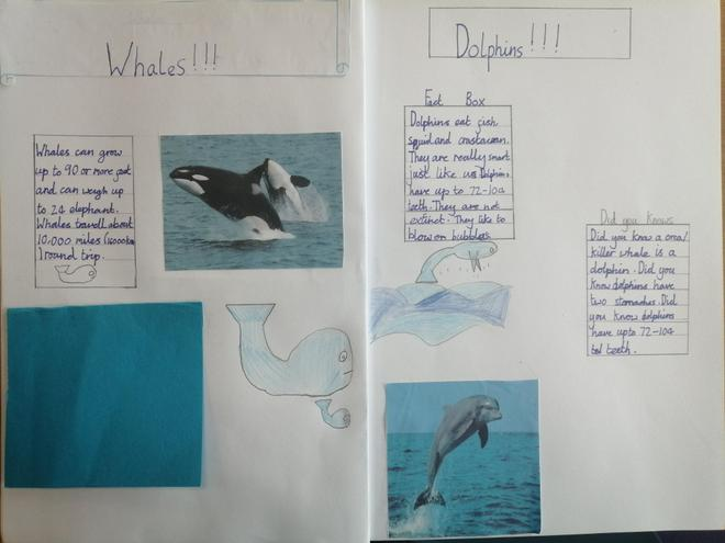 Super facts about whales!