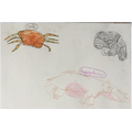 Alice's animal drawings