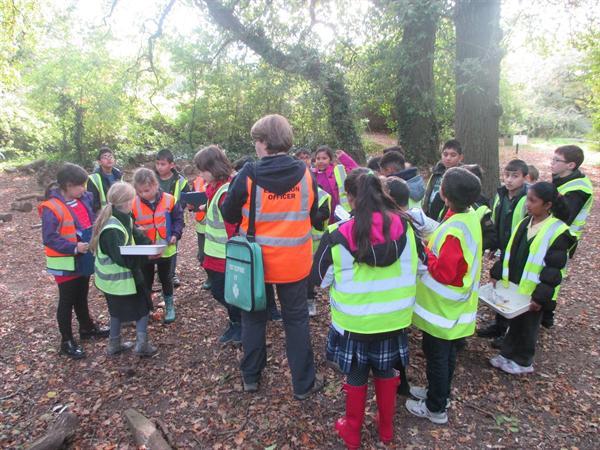 Woodlands Survey