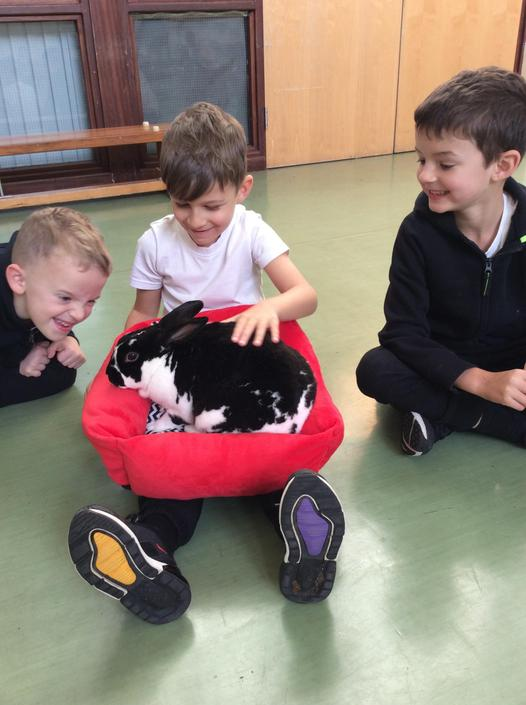 Lion Learners bring all things fluffy...