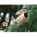 Ms McTavish spotted this bird on her bird feeder