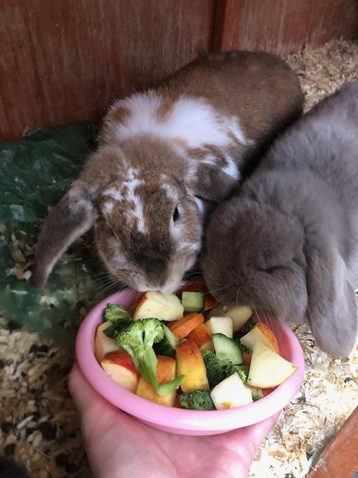Violet's bunnies