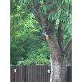Ashton spotted a squirrel on his bird feeder