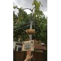 Resa hangs his bird feeder in his garden.