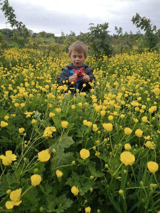Look at all those bright yellow buttercups