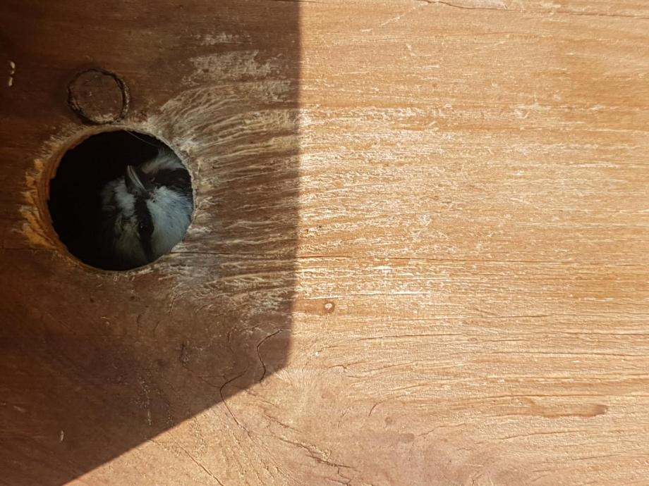 Some eggs hatched in our bird box!