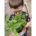 Jacob has been growing his own plants at home