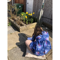 Payton has been drawing daffodils in her garden.