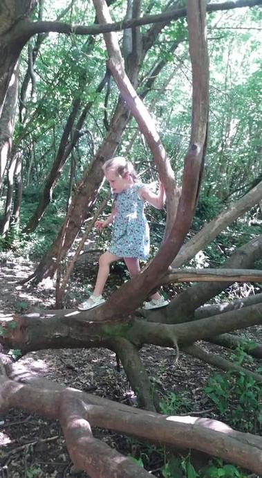 Exploring the woods and climbing trees