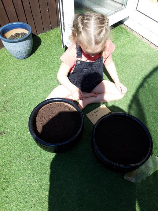 I planted sunflower seeds!