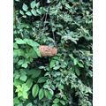 Ashton hung his bird feeder in a tree