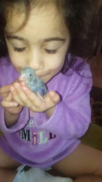 Parzheen's ducklings