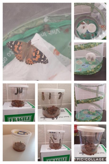 We watched caterpillars grow into butterflies!