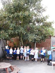 In the Nursery playground there is a 'Ladybird' tree!