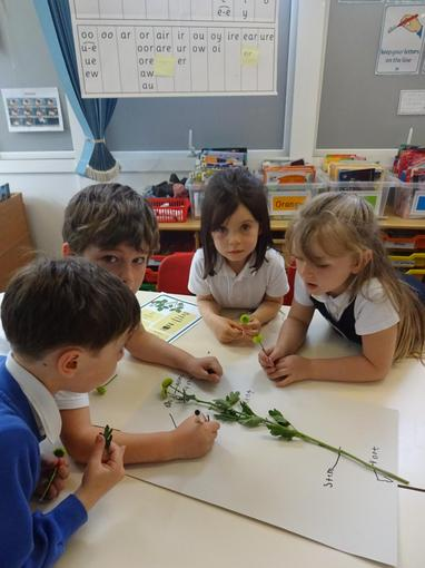 Working together to name the parts