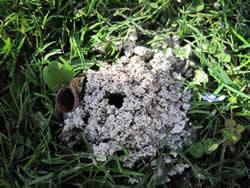 What could this be, a mini volcano or an ants nest?