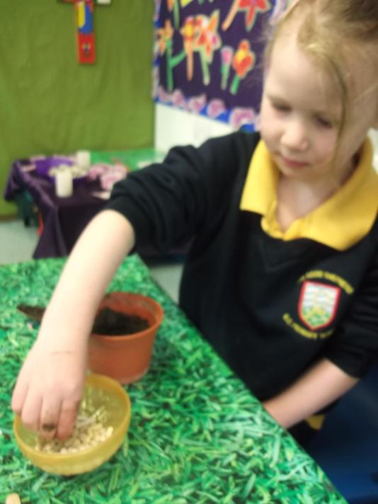 We planted one tiny seed in the soil.
